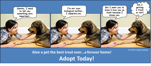 Animals - Adoption