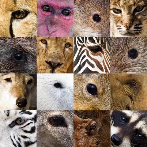 Болезни глаз у котов с картинками