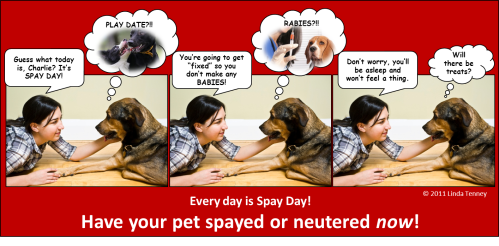 Animals - Spay Day Comic Strip