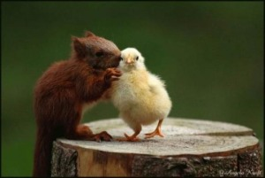 Squirrel and chick